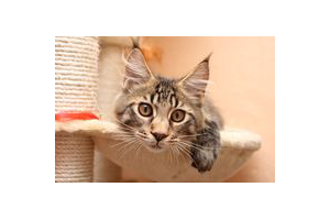 Malpropreté urinaire liée à l'environnement du chat