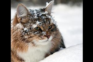 Prendre soin de son chien et de son chat en hiver