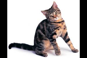 Contre quelles maladies vacciner votre chat ?
