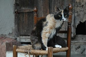 L'insuffisance rénale chronique chez le chien et le chat