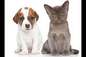 Read more about the article N'oubliez pas de vermifuger vos animaux !