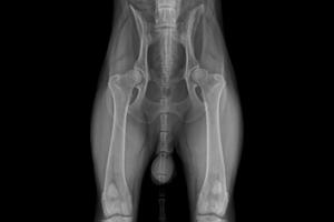 Appareil radiologique