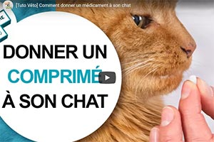 Donner un comprimé à un chat (vidéo)