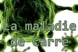 La maladie de Carré (vidéo et article)