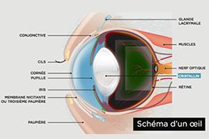 Les urgences oculaires